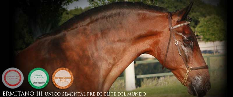 yeguada los amadores caballos para deporte purebreed spanish horses to sports 06