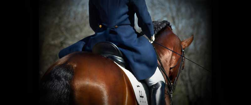 yeguada los amadores caballos para deporte purebreed spanish horses to sports 15